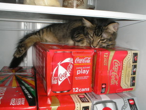 cat in fridge