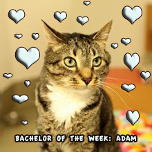 Bachelor of the Week