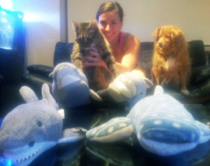 Enjoying Shark Week with momFOD, Doodle, and all of our shark mascots. I'm still suspicious of them, despite their plush nature.