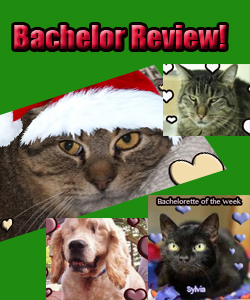 Bachelor Review!