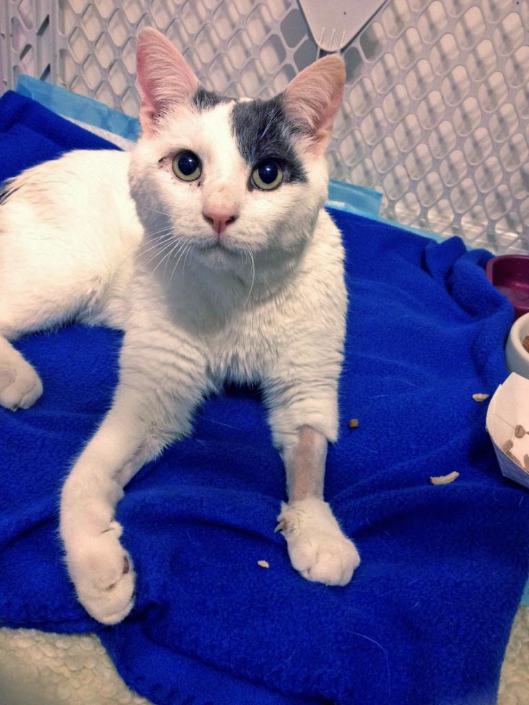 Casper, the friendly cat