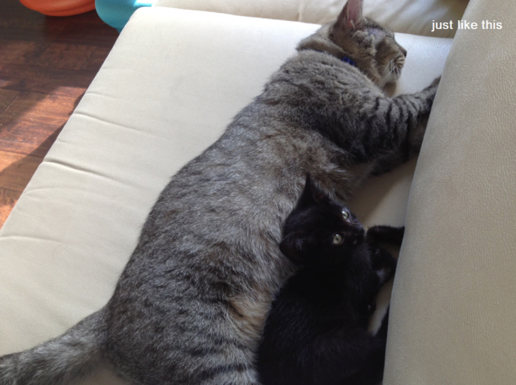 Gio in the middle of teaching lounging to a lounging newcomer.