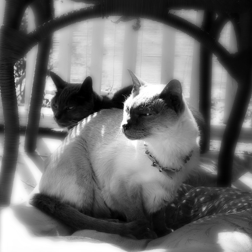 merlin and gris gris sunbathing on porch