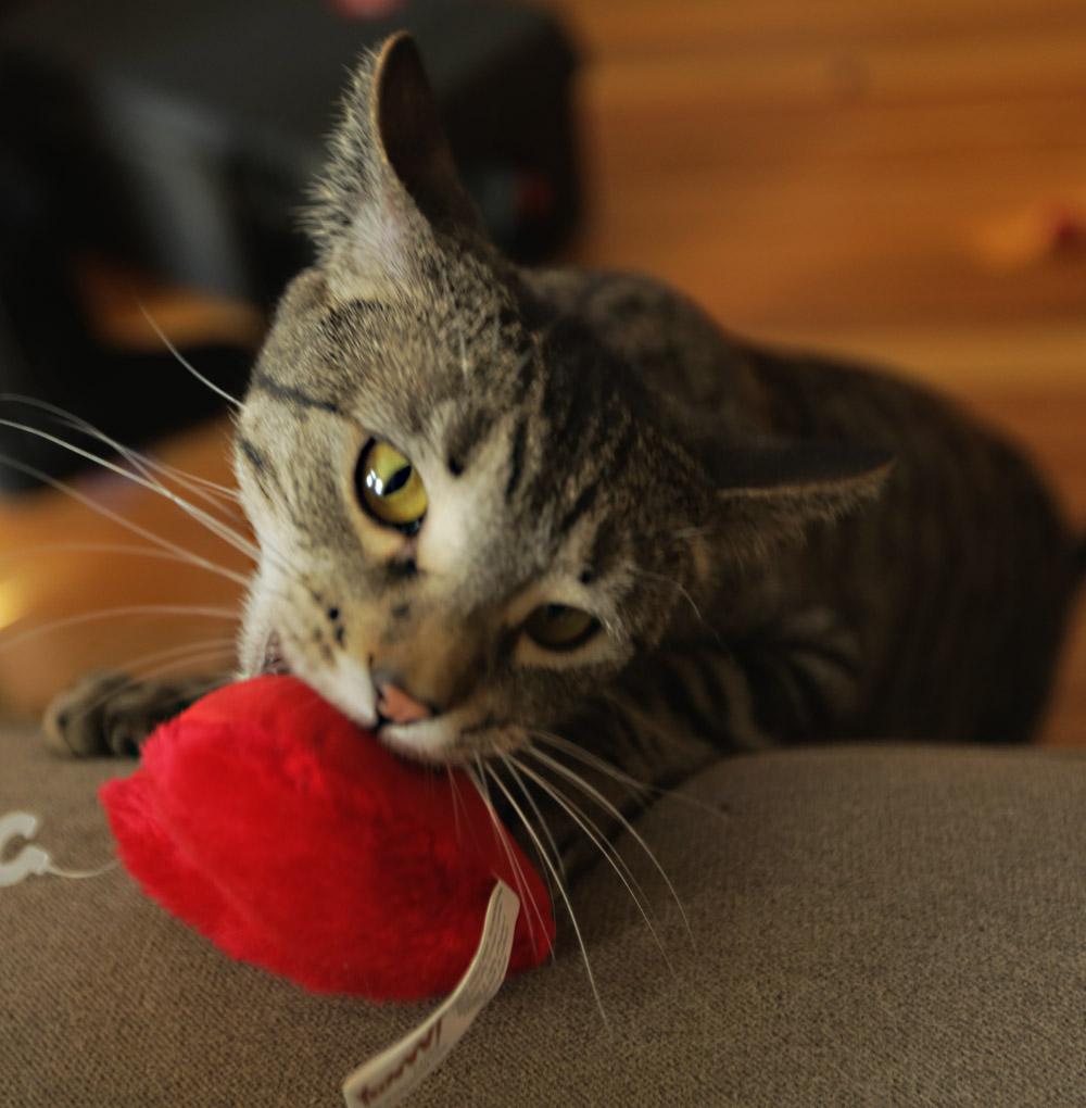Mogly spies the Yeoww catnip heart.