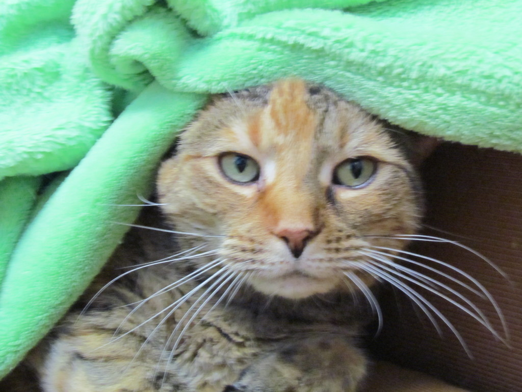 Snuggling into a nicely toned green blanket to bring out her eyes.