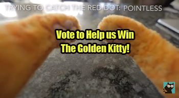 VOTE for Cat Behavior Finally Explained!