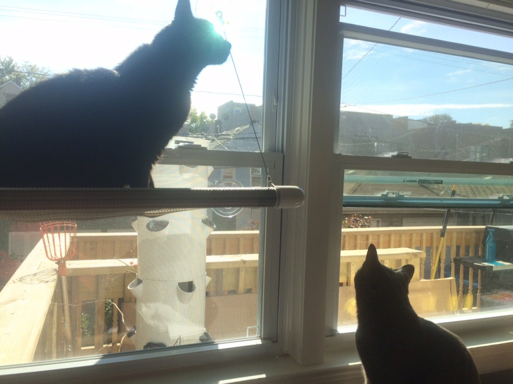 Niles and Sprinkle enjoying the sun porch.
