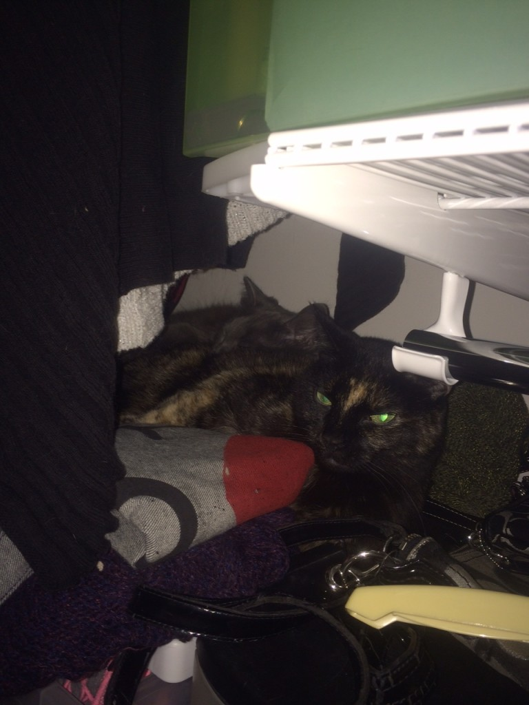 Peabody and Louie bonding in the closet.