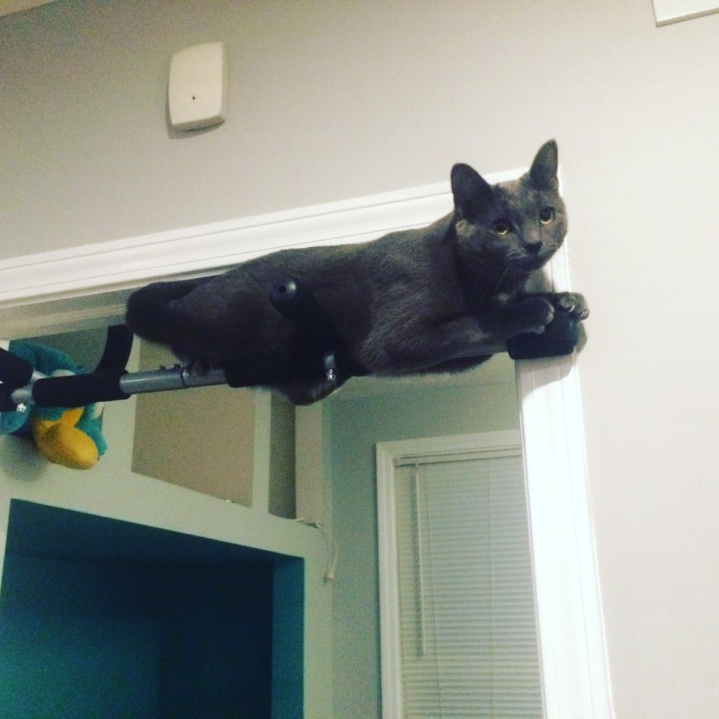 Sprinkle tries out the pull-up bar.