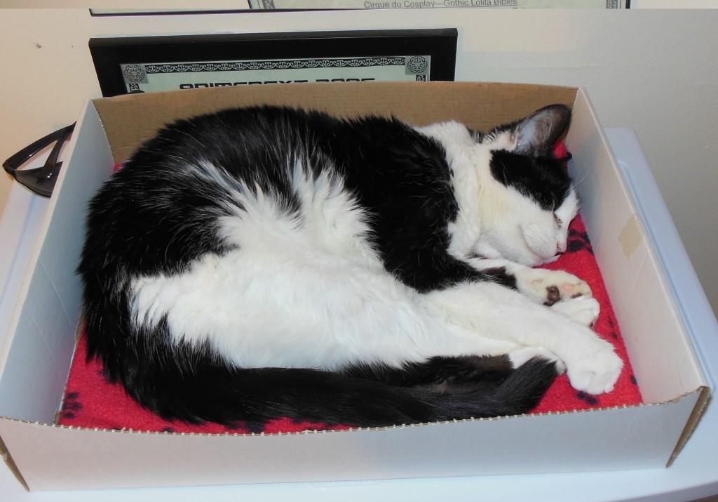 Patches sure loves boxes.
