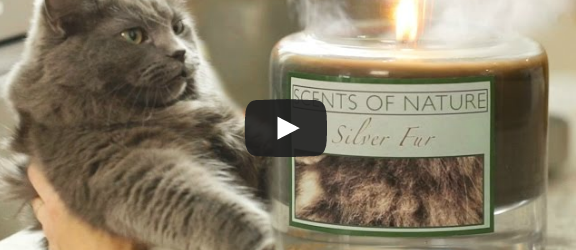 CATastrophes Cat Web Series Candles