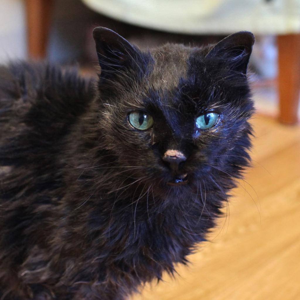 Henrietta in her dark phase.